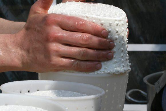 Méthodes omiques et écosystèmes microbiens des laits et des fromages